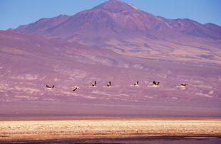 Atacama 01 (Custom)